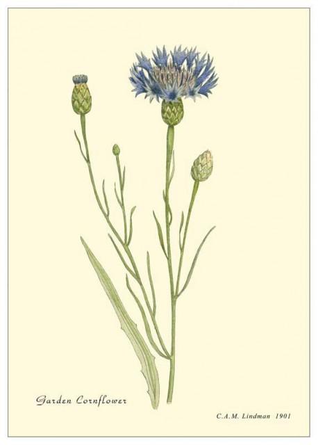 Botanica157