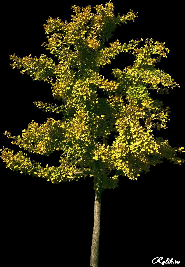 1440162392_treesbushes03