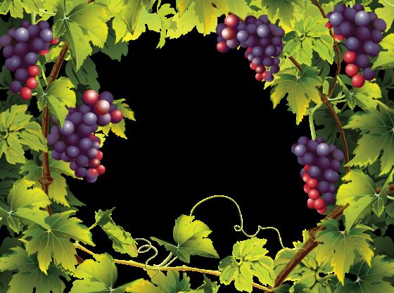 loza-vinograd 2