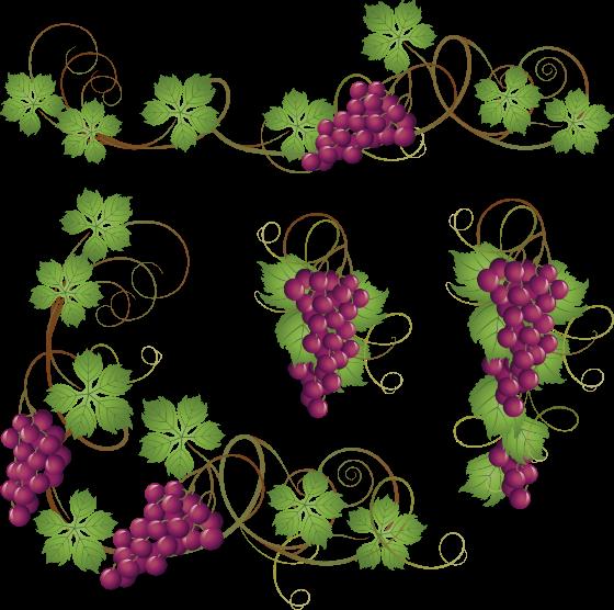 vinograd 1