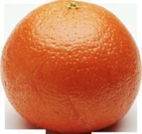 apels56[1]