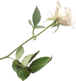 белая пнг