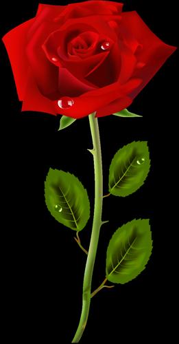 роза пнг