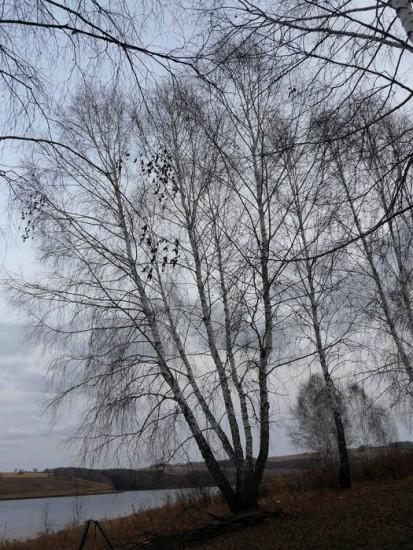 женя деревья