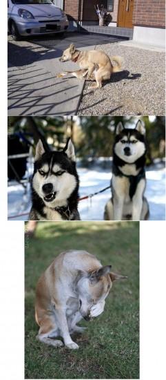 Mycreo_dogs_WTF