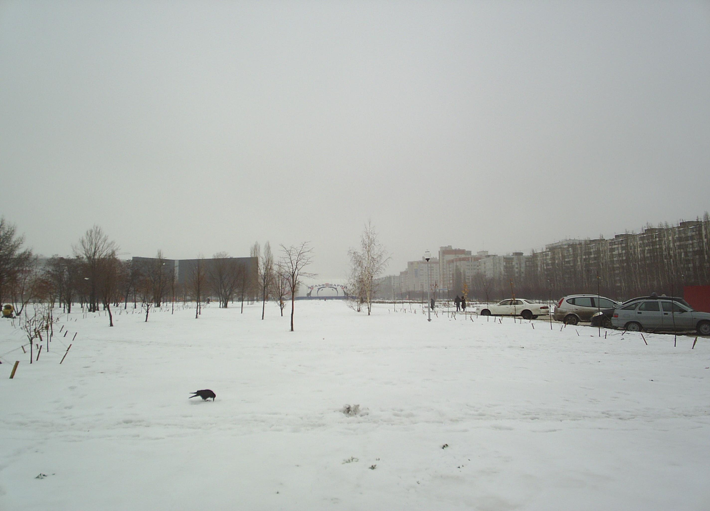 Дельфинарий в снегу