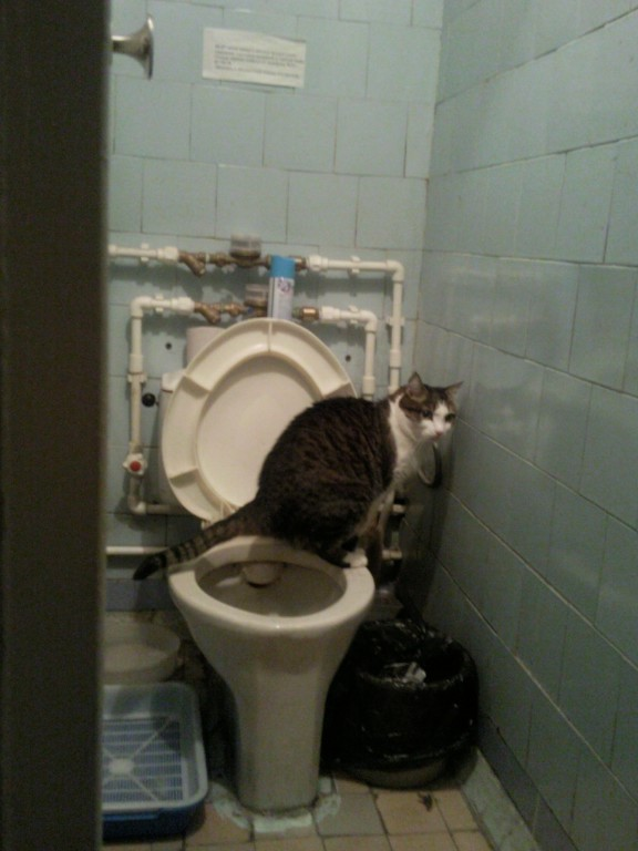 В туалет хожу с кровью что это