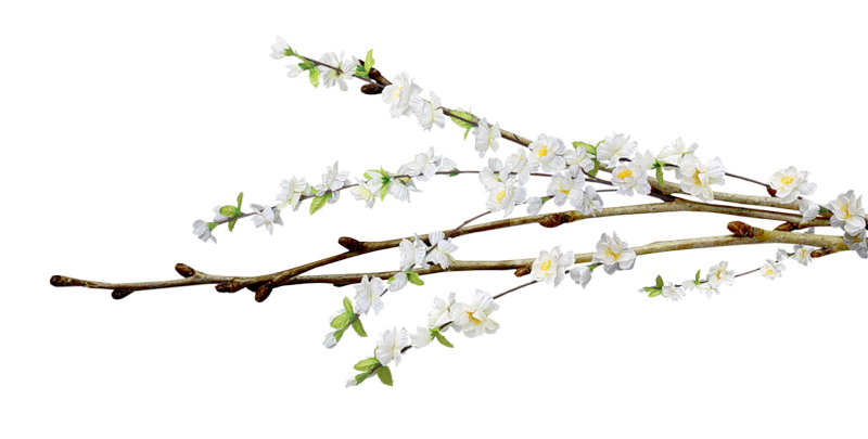 Картинки ветки сакуры