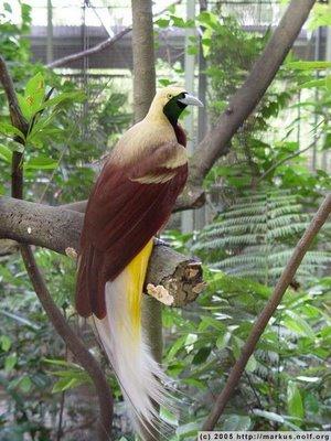 ...в каталоге: птицы описание и фото и фото птица ястреб.