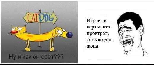 Котопёс