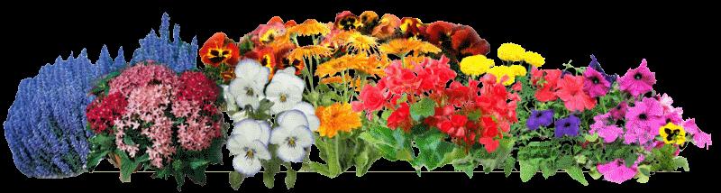 flowersm