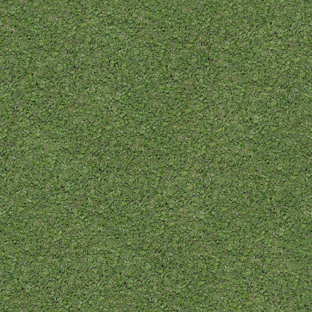 трава3