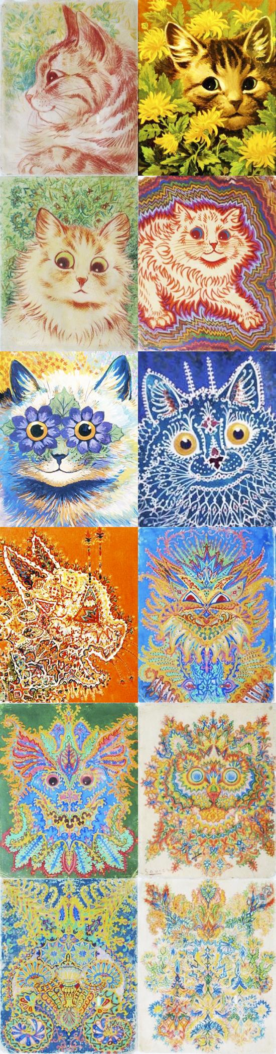 красивые-картинки-картинки-коты-живность-910019