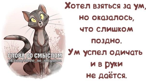 107106965_1384198135_frazochki21