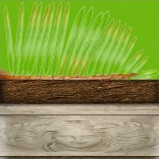 Растение комнатное 2