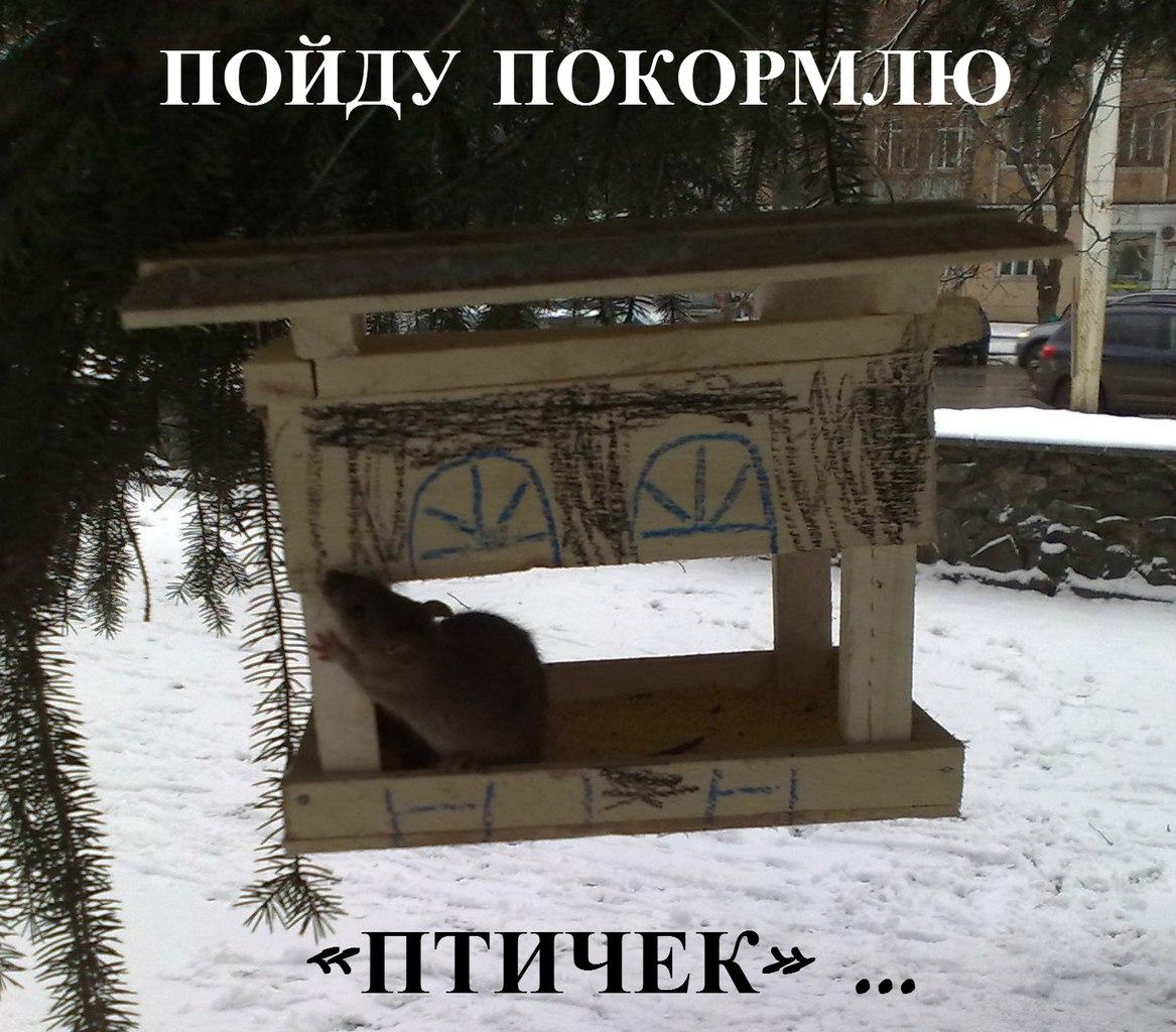 крысы в Перми на улице в кормушке для птиц