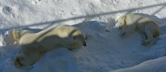 2011.03 pervaya poezdka v Rovaniemi i zoopark (147)