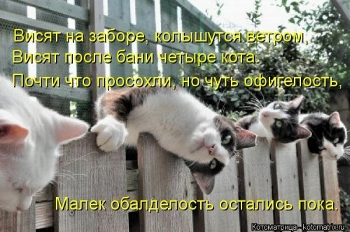 107257184_large_13
