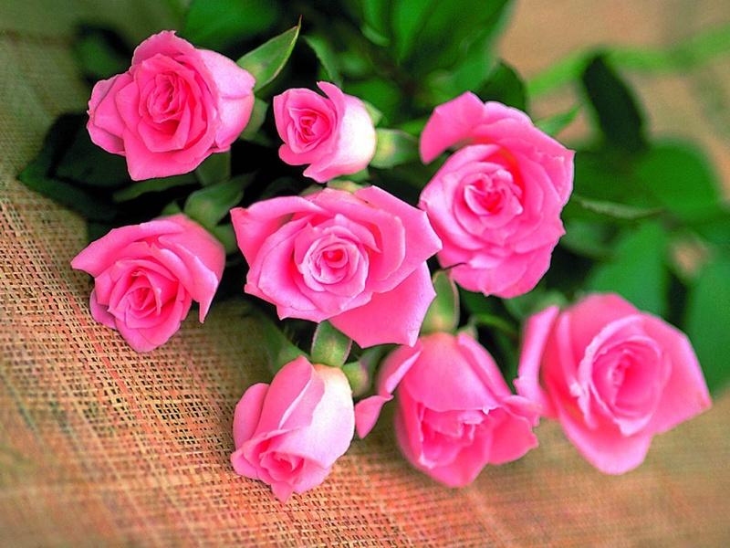 rosesqd2