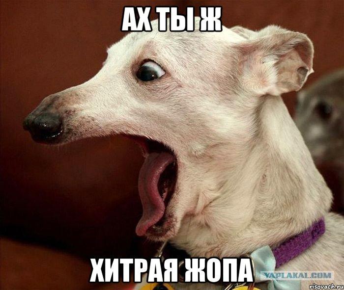 hitraya-zhopa_25407678_orig_