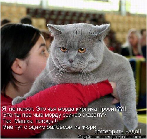 108386360_5285052_Stimka_ru_1281517398_1