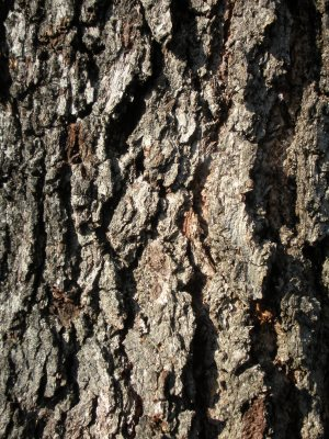 stock__tree_bark_texture_by_soulaura777-d374yng