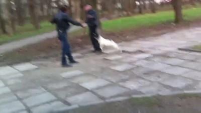 С псом можно не бояться драки