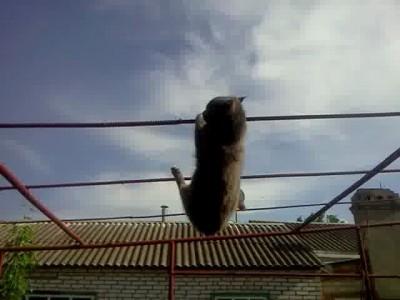 Кошачья ху..ня (2)