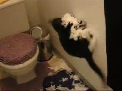 кошка-вредительница
