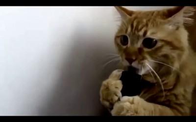 Кот и пылесос.
