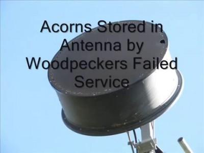Found a great cache for acorns / Нашли Большой тайник для жолудей