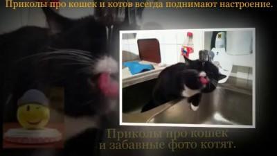 Приколы про кошек и забавные фото котят.