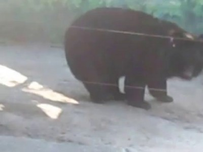 У медведя затекла шея