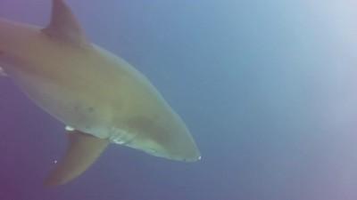 Акула может не только укусить