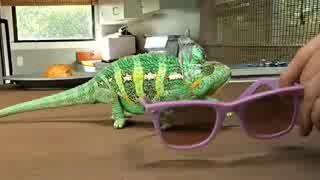 Как хамелеон меняет цвета