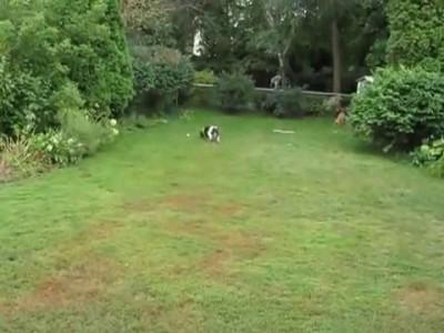 Слепая собака тоже играть с мячом