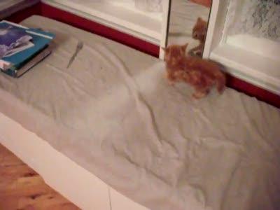 Котенок и зеркало