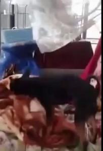 Собака в рот давака