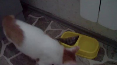 Котенку дали рыбу