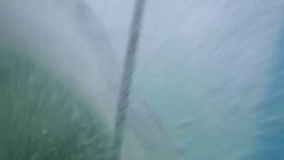 Best Shark Attack Video - gigantic Great White Sha