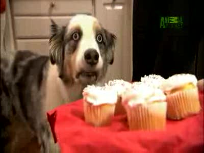 Собак заказывали?