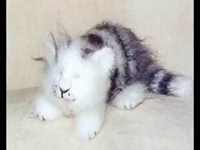 Войлочные кошки Натальи Фадеевой