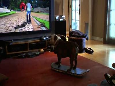 Собака скейтер