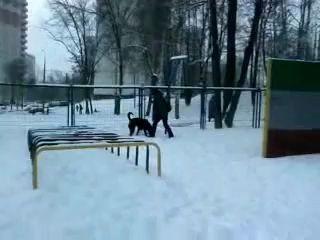 Ротвейлеры: Мои Девочки - Рада и Дася. 23.12.11г.