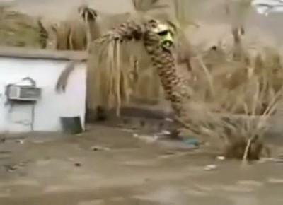 Ликвидация пальмы без топора .