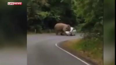 Разъяренный слон растоптал автомобиль с туристами