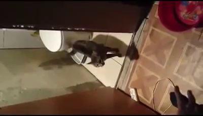 кот не пускает в туалет