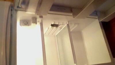 в холодильнике мышь повесилась