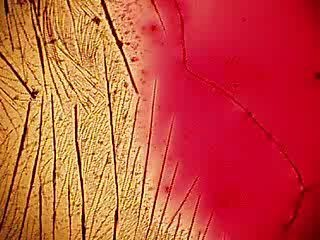 Кристализация марганцовки