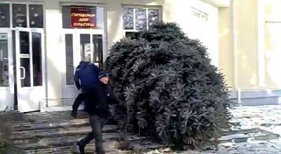 Таганрог занос елки